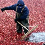Cranberry Bog is like a Genealogy Search